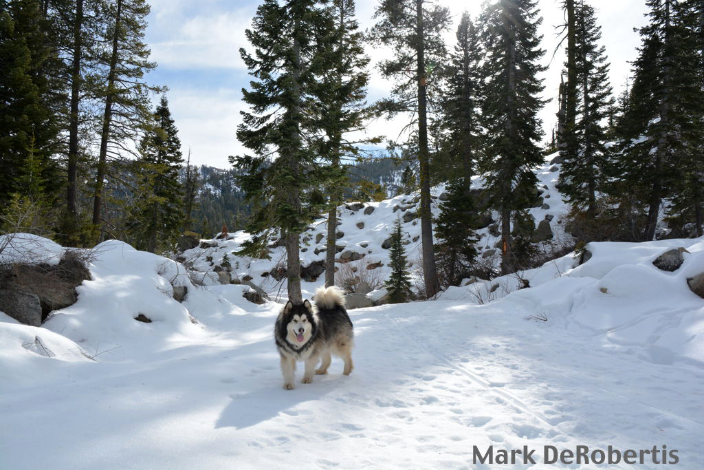 06 White Wolf Tahoe